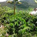 Farm La Miranda 3
